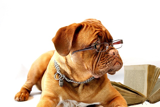Our dog thepsychiatrist